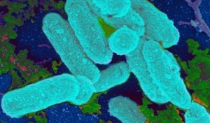 BacteriaAntibiotics